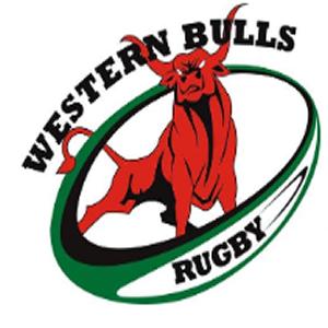 Western bulls